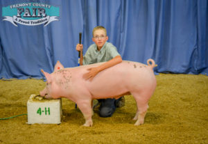 Swine Project at County Fair